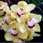 орхидеифото