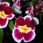 орхидеи купить