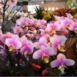 орхидеи9