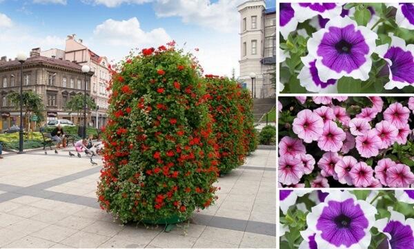 kartinki-cvety