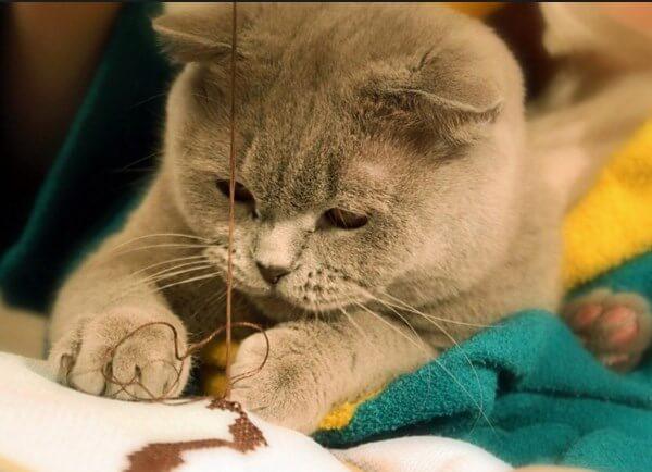 Ворожба на кошачьих лапках